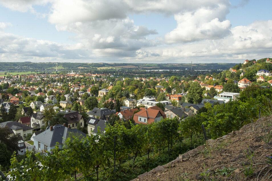Viele Bäume heben sich aus dem Stadtbild der Niederlößnitz beim Blick vom Weinberg Friedensburg hervor. Sie stehen in den Gärten.