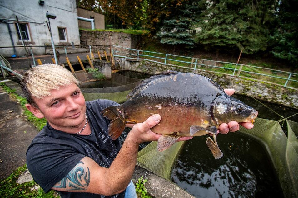 Matthias Schnek mit einem Karpfen. Die kauft der Familienbetrieb von anderen Erzeugern. Fisch-Schnek produziert in Limmritz und im Töpelwinkel ausschließlich Forellen und verkauft sie im Hofladen. Und am Wochenende beim Fischerfest.