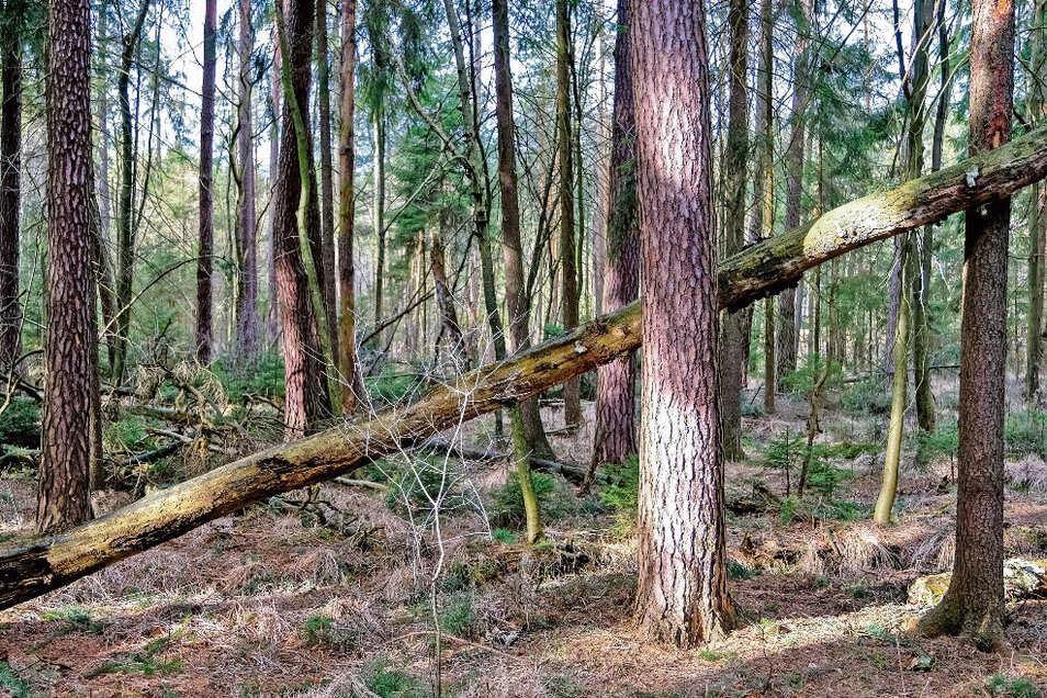 Herwart und Friederike hinterließen deutlich größere Schäden. Aber noch immer gibt es weitere Windböen. Darum meiden derzeit selbst die Forstleute den Wald.