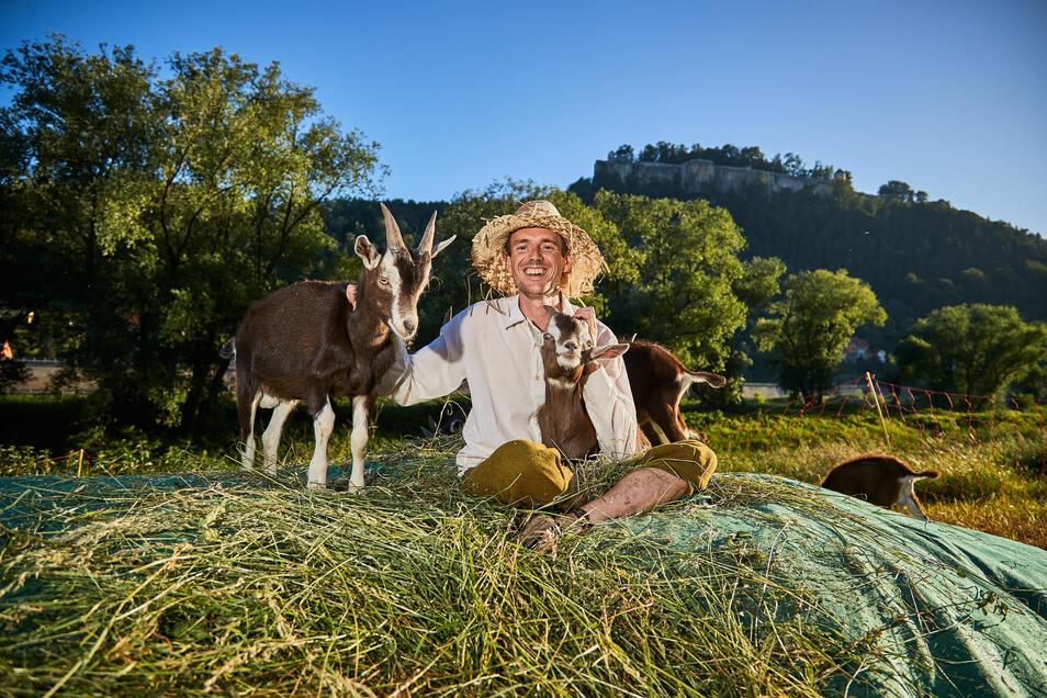 Die Ziegen von Patrick Pietsch wechseln am Sonntag die Elbseite. Sie gehen ins Winterquartier. Foto: Marko Förster