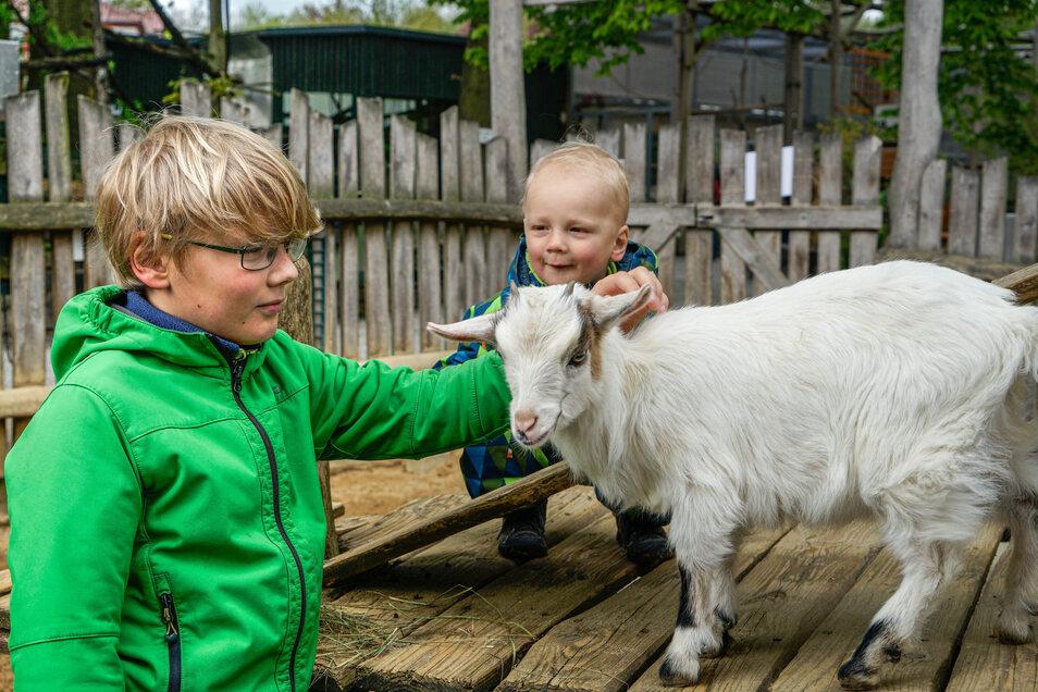 Bevor für den Viertklässler Ragnar am vergangenen Mittwoch wieder der Unterricht in der Schule startete, konnte er mit seinem Bruder Magnus Sachkunde hautnah im Tierpark erleben, zum Beispiel mit Ziegen.