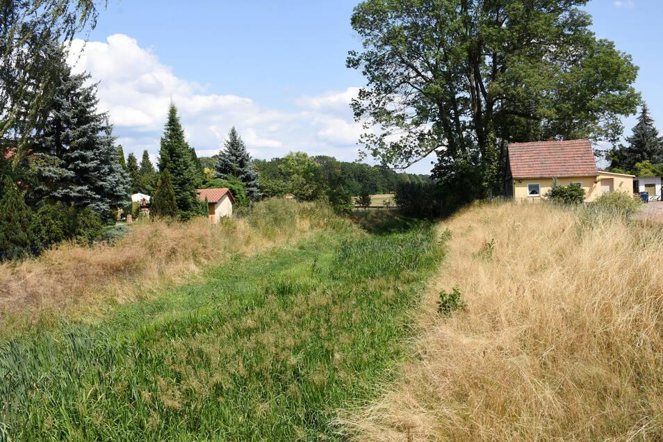 Der Flusslauf des Weißen Schöps ist in Hammerstadt unter dem Grün kaum noch zu sehen.