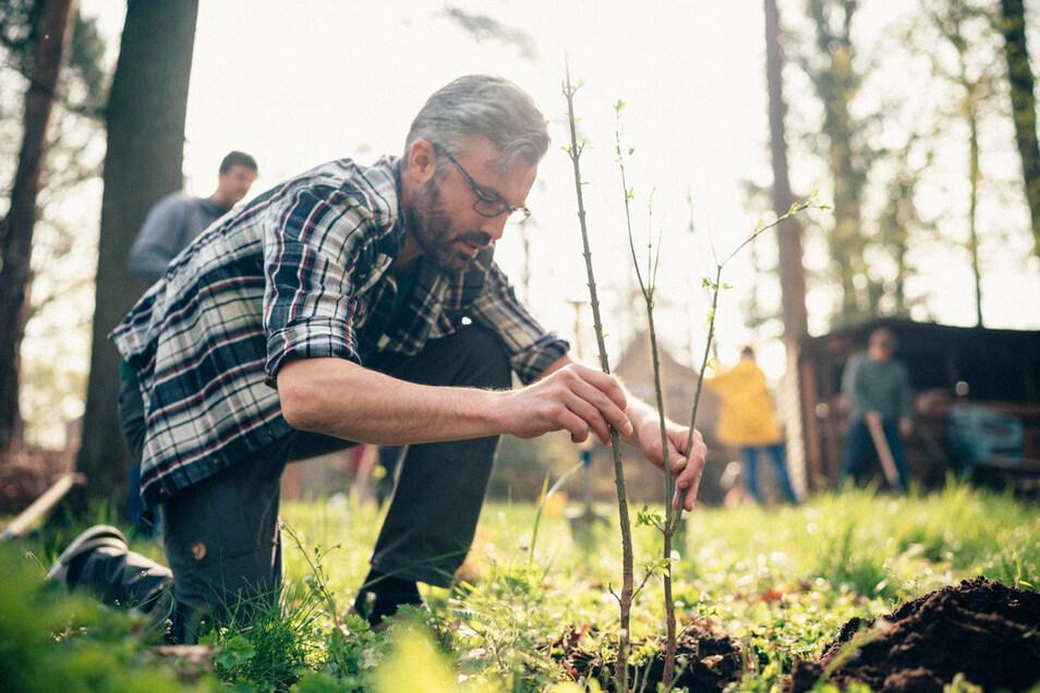 Bereits im Frühjahr wurden auf einem Gelände der Stadtentwässerung testweise erste Bäumchen in die Erde gebracht.