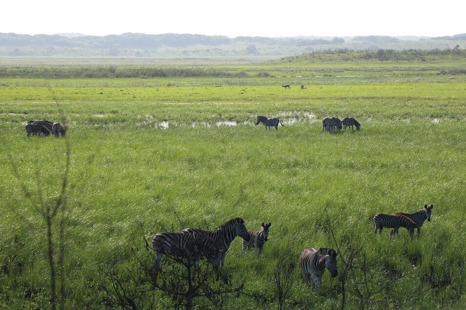 Mosambik gehört nach langjährigem Bürgerkrieg zu den ärmsten Ländern der Welt. Auch viele Wildtiere mussten wie hier im Reservat Especial de Maputo wieder angesiedelt werden.