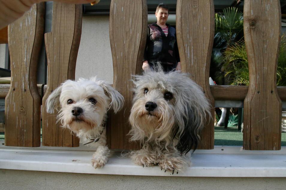 So sehen Bolonka-Hunde aus. Für Hundefreunde mit diesen Tieren gibt es am Sonnabend ein Treffen im Kodersdorfer Ortsteil Wiesa.