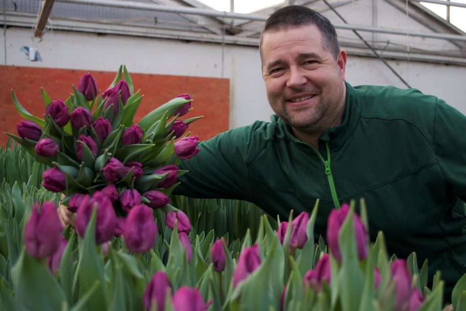 Gärtnermeister Alexander Bernhardt freut sich über die Tulpenpracht in seinen Gewächshäusern.