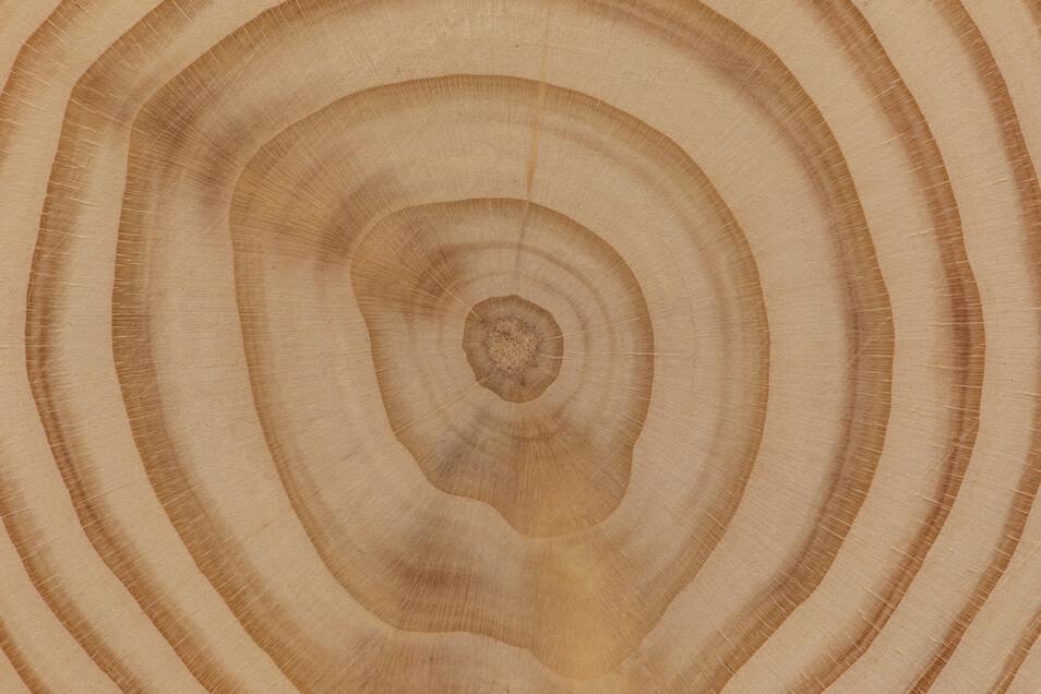 Die Jahresringe erzählen von guten und schlechten Zeiten eines Baumlebens.