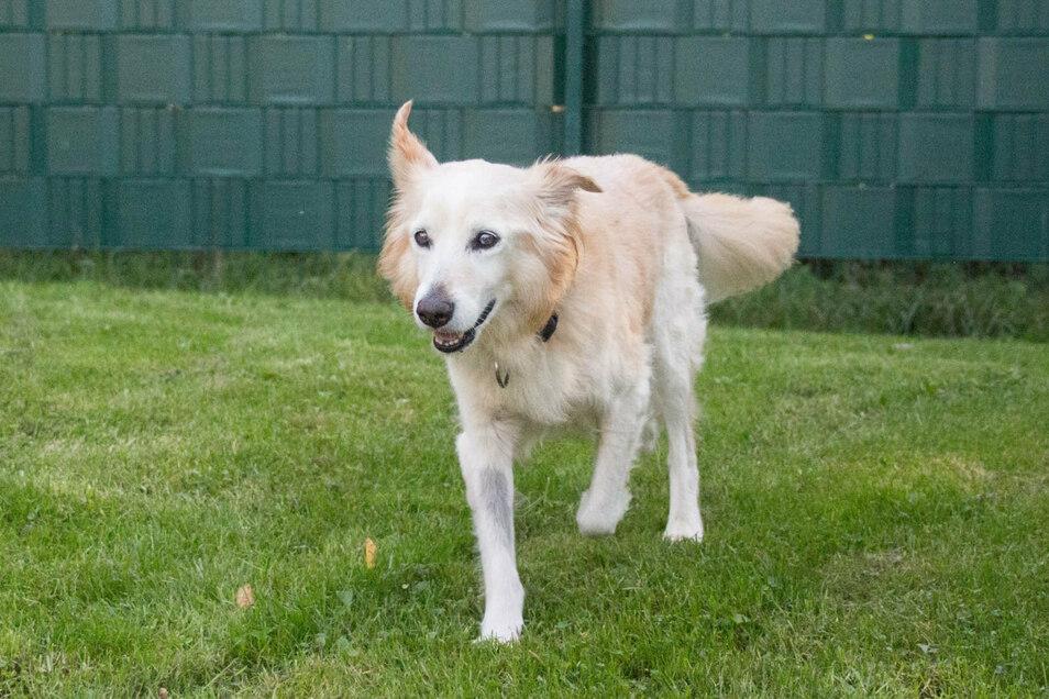 Der Hund Sammy litt unter einem Tumor, der jetzt erfolgreich operiert werden konnte.