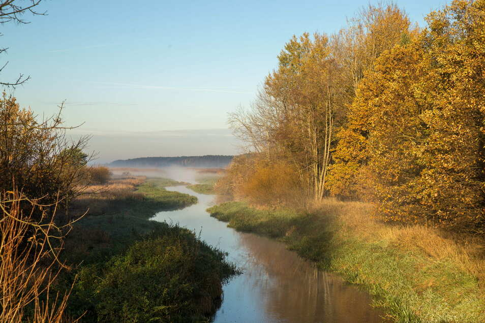 Die Natur lässt sich in diesen Herbsttagen am Stausee Quitzdorf genießen, wie hier am Einlauf des Schwarzen Schöps. Seit einem Monat ist das Betreten der Ufer wieder erlaubt.