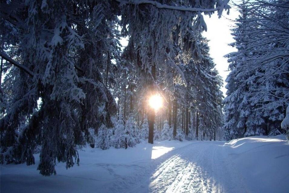 """Osterzgebirge. Dieter Böhme aus Dippoldiswalde faszinierte die tiefstehende Sonne im verschneiten Wald. Uns auch. """"Sonne lacht durch die Bäume"""" nannte er sein Motiv."""