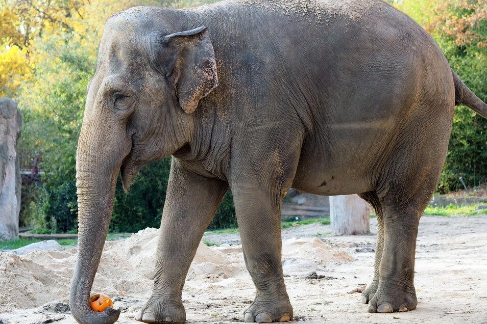 Die 48 Jahre alte Elefantendame Saida aus dem Leipziger Zoo zieht nach Karlsruhe um.