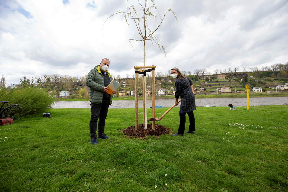 OB-Vertreter Thomas Gischke (l.) und Caritas-Leiterin Silke Maresch an der neuen Silberweide in Pirna: Bäume verbessern nachhaltig das Stadtklima.