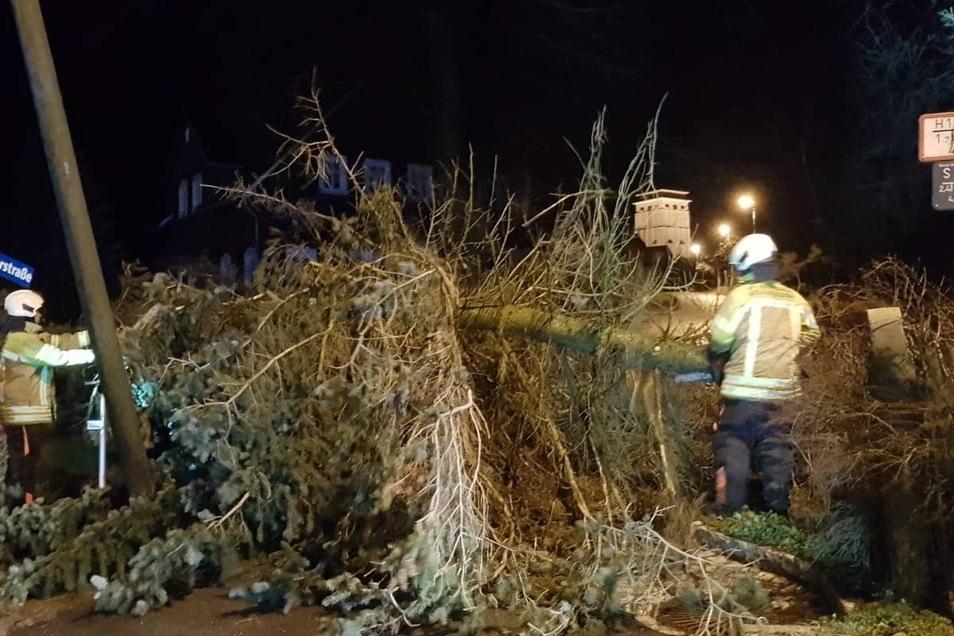 Am Sonntag um 22.21 Uhr musste die Ortsfeuerwehr Neugersdorf erneut ausrücken, weil Bäume auf die Kreuzung Dürerstraße/Bergstraße stürzten. Die Kameraden entfernten diese.