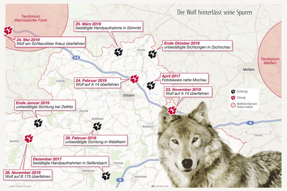 Ein weiterer Wolf wurde bei einem Unfall tödlich verletzt. Diesmal auf der Bundesstraße 175 zwischen Rochlitz und Köttern.