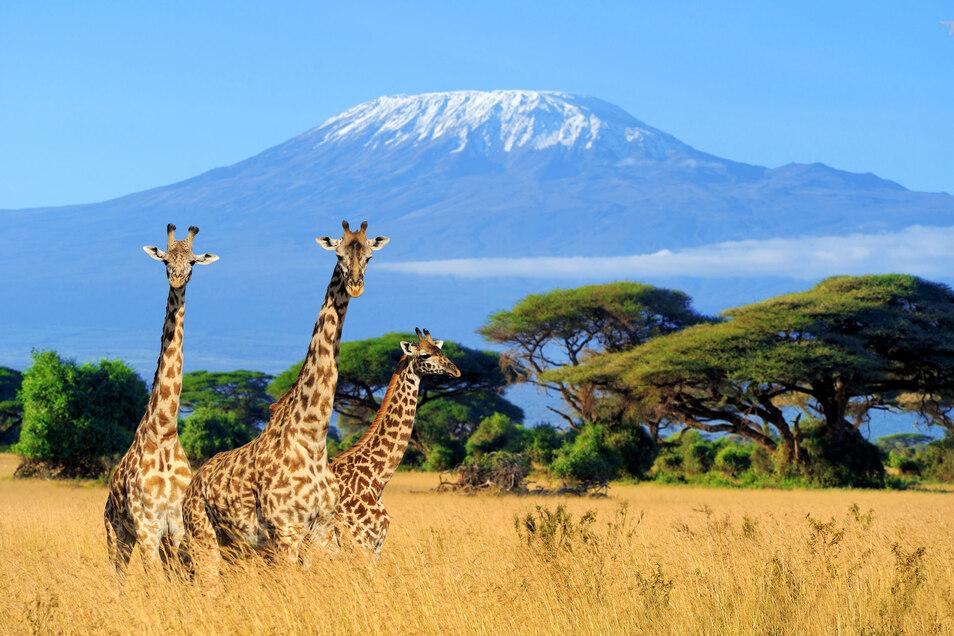 Abenteuerlicher als jede angebotene Safari: Reiseveranstalter steuern gerade durch sehr angespannte Zeiten.