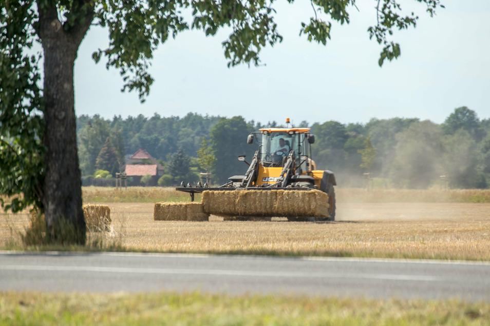 In Sachsen arbeiten immer weniger Menschen in der Landwirtschaft