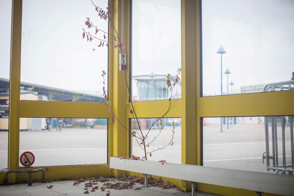 Hinter den Kulissen des Kaufparks: Im ehemaligen Baumarkt wächst ein Bäumchen im Eingangsbereich. Noch dieses Jahr soll das Gebäude abgerissen werden.