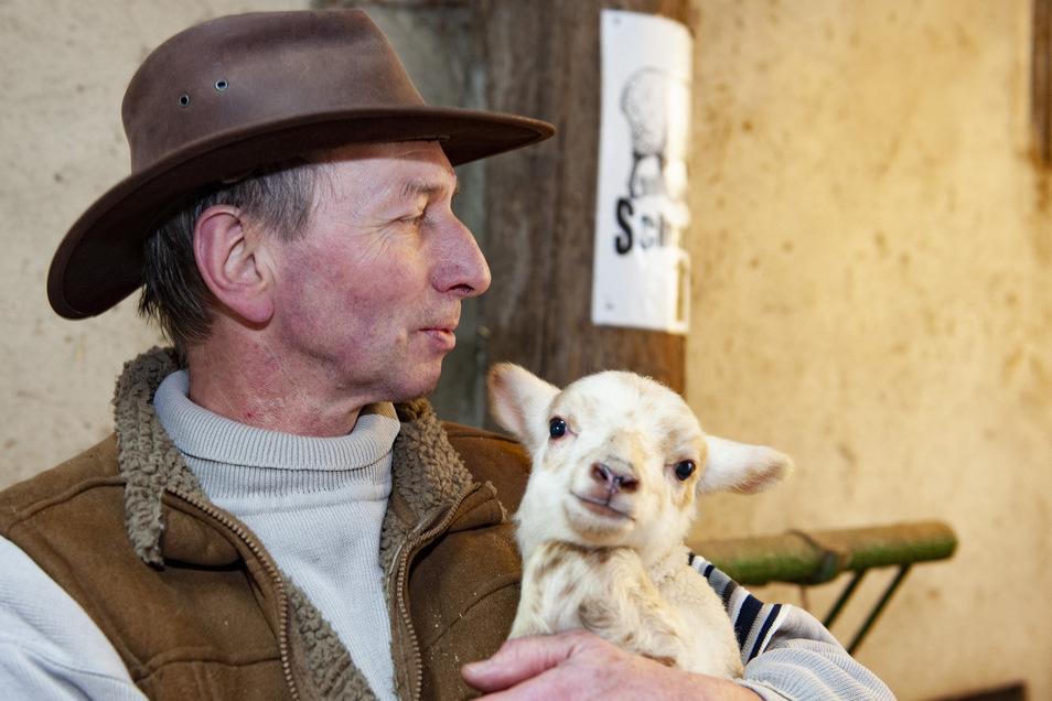 Der Cunnersdorfer Andreas Walther mit einem kleinen süßen Schafböckchen.