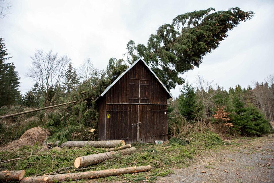 Seit Ende 2017 reihte sich im Wald Katastrophe an Katastrophe. Im März 2019 hinterließ Sturm Eberhard diesen Fichtensalat am Hühnerberg, Revier Rosenthal.