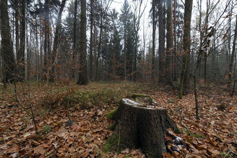 Auf einem Grundstück am Anbau soll der Bestattungswald entstehen.