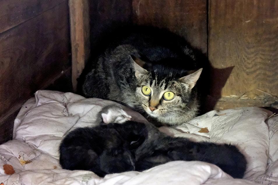 In der Hundehütte wurden die Kätzchen während der Pfingstfeiertage geboren.