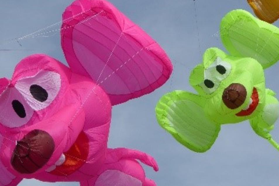 Auf den Johannstädter Elbwiesen steigt am Sonntag das große Drachenfest.