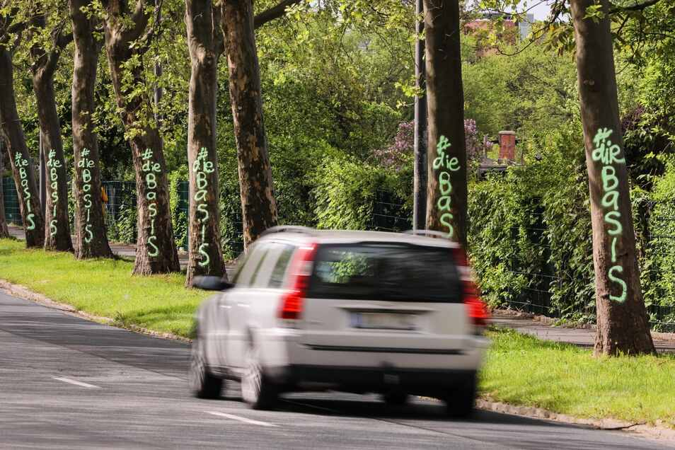 Die beschmierten Bäume stehen entlang der Hansastraße.
