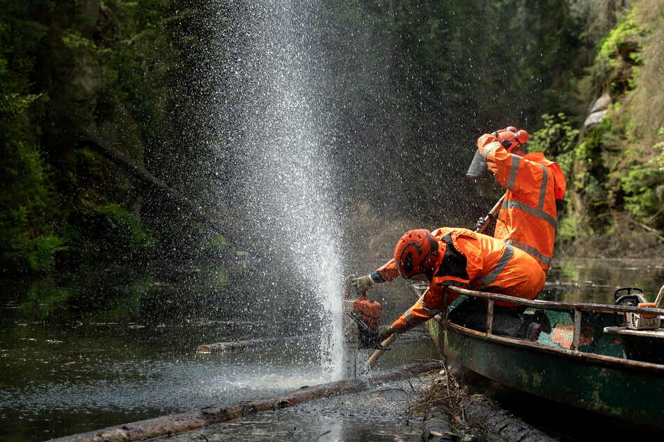 Kettensäge im Wassereinsatz: Michael Erbert vom Sebnitzer Bauhof beim Entasten einer Fichte auf der Oberen Schleuse.