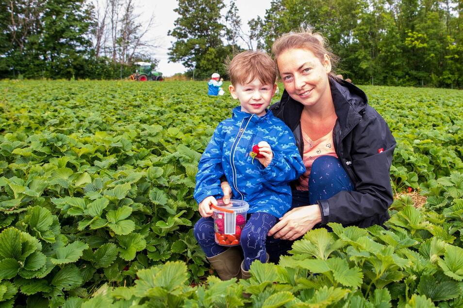 Selbst ist der Pflücker: Ben stöbert mit seiner Kindergartengruppe und Mama Franziska im Pesterwitzer Erdbeeracker.