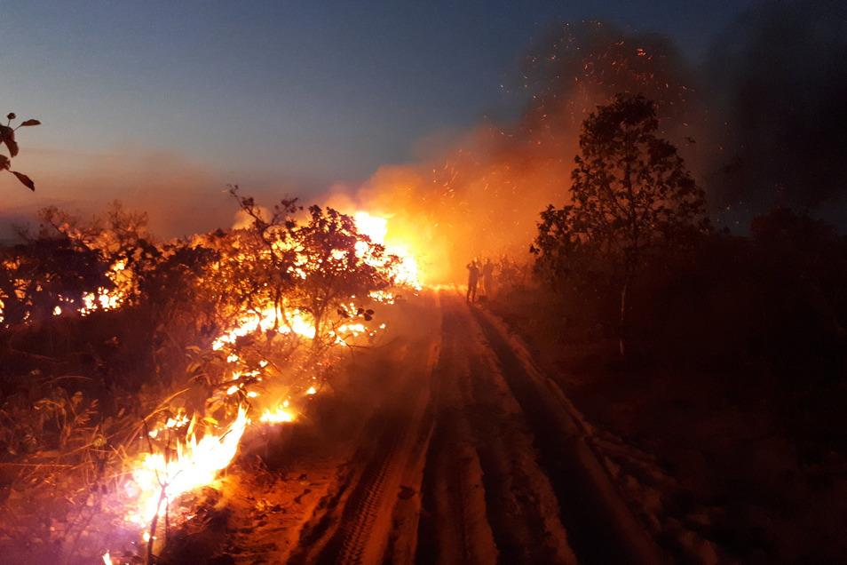 Waldbrand im Naturpark Chapada dos Guimaraes: Seit Wochen wüten Tausende Feuer im Amazonasgebiet und den angrenzenden Steppengebieten.