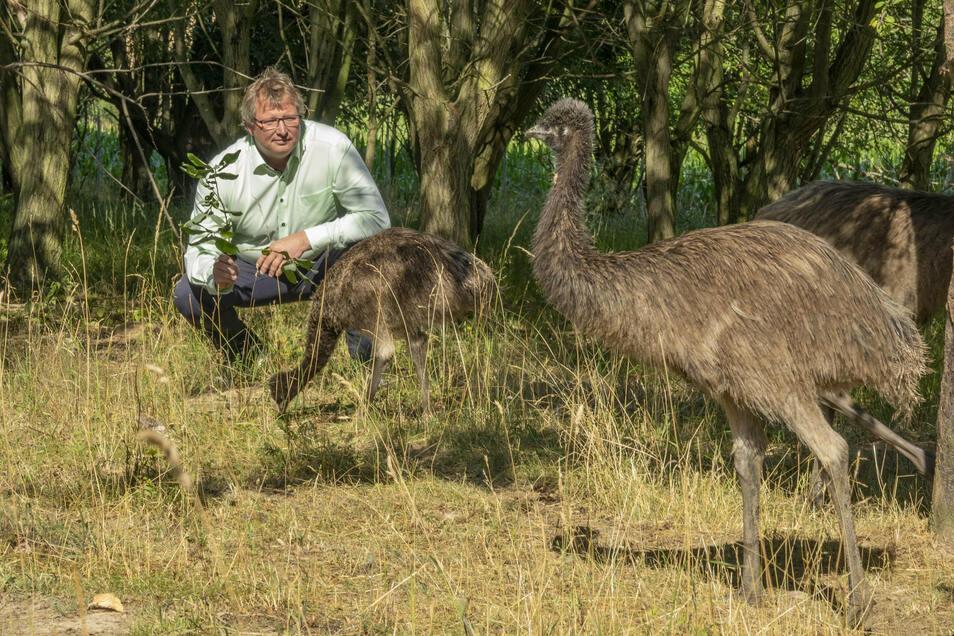 Markus Weinert, Chef des Sonnenhofs in Ossig, lockt die Emus mit ein paar Blättern, die er vom Baum gepflückt hat. Die Tiere sind neu auf dem Sonnenhof Ossig.