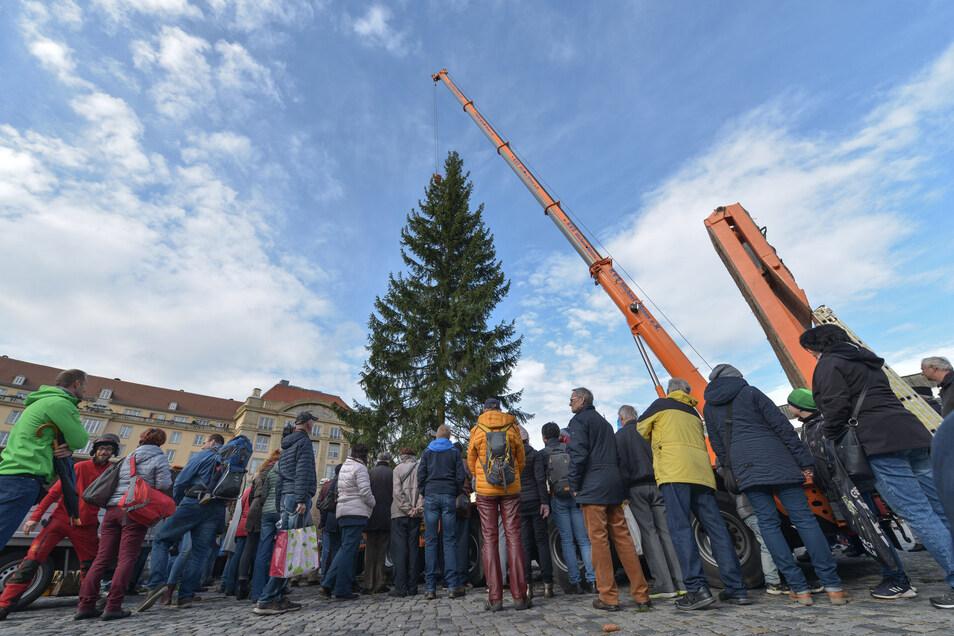 Schon das Aufstellen des Striezelmarkt-Baums ist in Dresden ein Ereignis. Wie der Baum dieses Jahr aussehen wird, bleibt bis zum Spätherbst eine Überraschung.