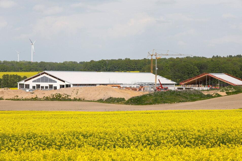 Die Baustelle des Kuhstalls Herwigsdorf: Der erste Teil ist bereits fertig, der zweite - im Hintergrund - im Bau.