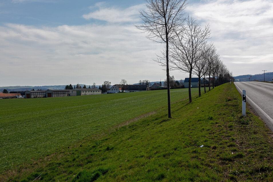 Auf dieser Fläche zwischen Possendorf und Kleincarsdorf soll die neue Stallanlage entstehen.