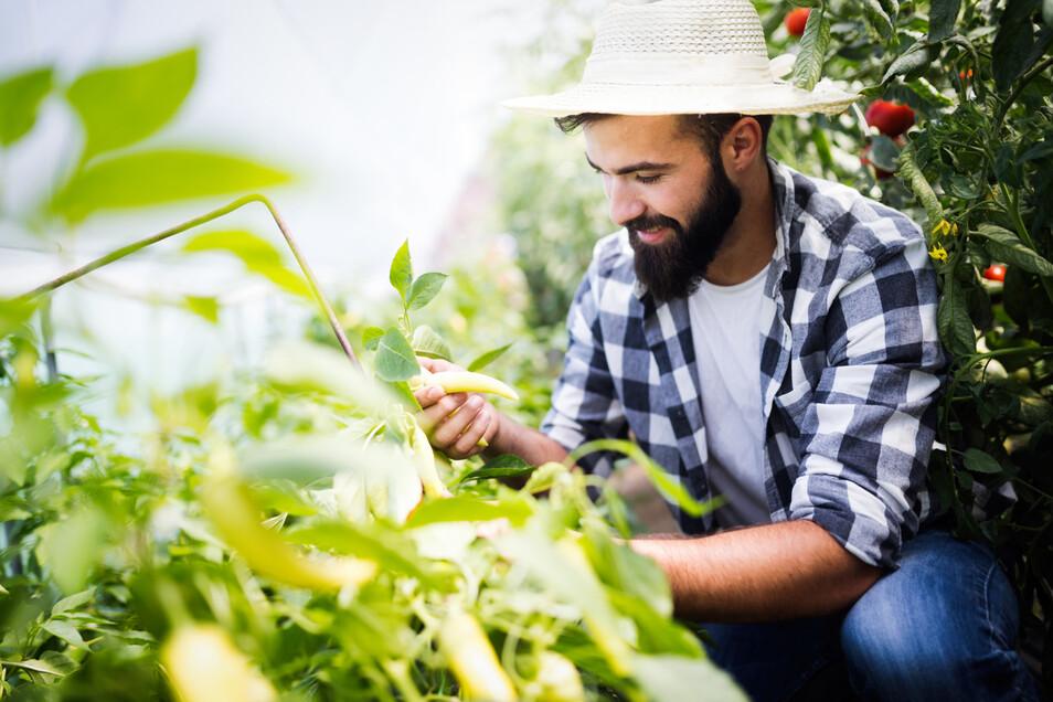 Mit den passenden Pflanzen kann jeder Hobbygärtner erfolgreich Pflanzen anbauen.