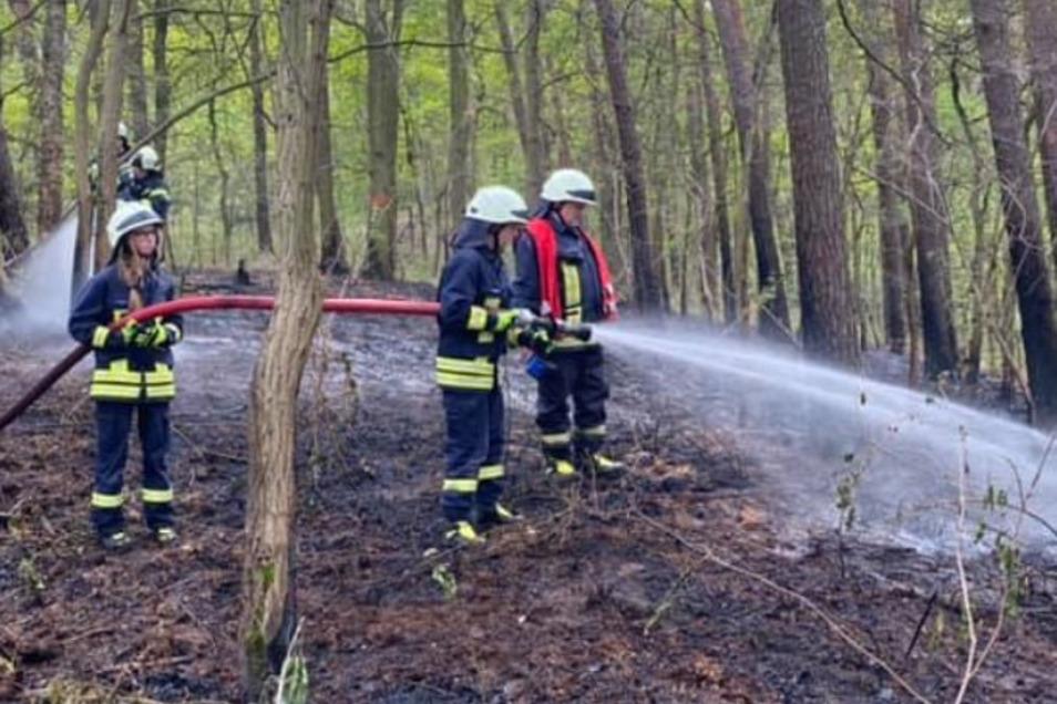 Feuerwehrleute löschen den Waldbrand bei Koselitz.