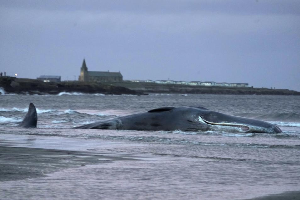 Immer wieder werden in den Weltmeeren tote Wale entdeckt, die wahrscheinlich durch Plastik verendeten.