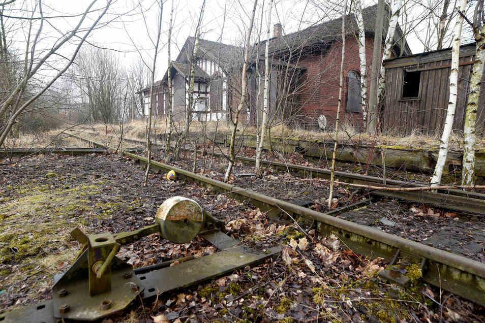 Zugewachsen sind die Gleise der Herrnhuter Strecke am Bahnhof Obercunnersdorf.