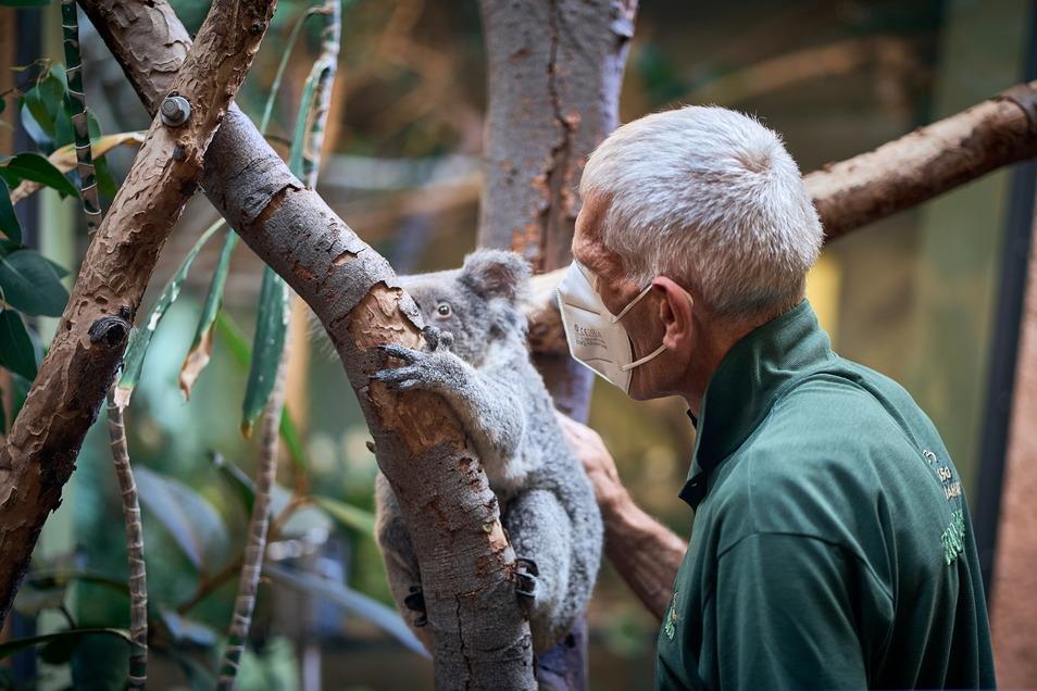 Besonders große Lust hat Sydney am Morgen erstmal nicht, von ihrem Ast zu steigen. Der Job als Pfleger der zuweilen etwas sturen Koalas erfordert oft Geduld.
