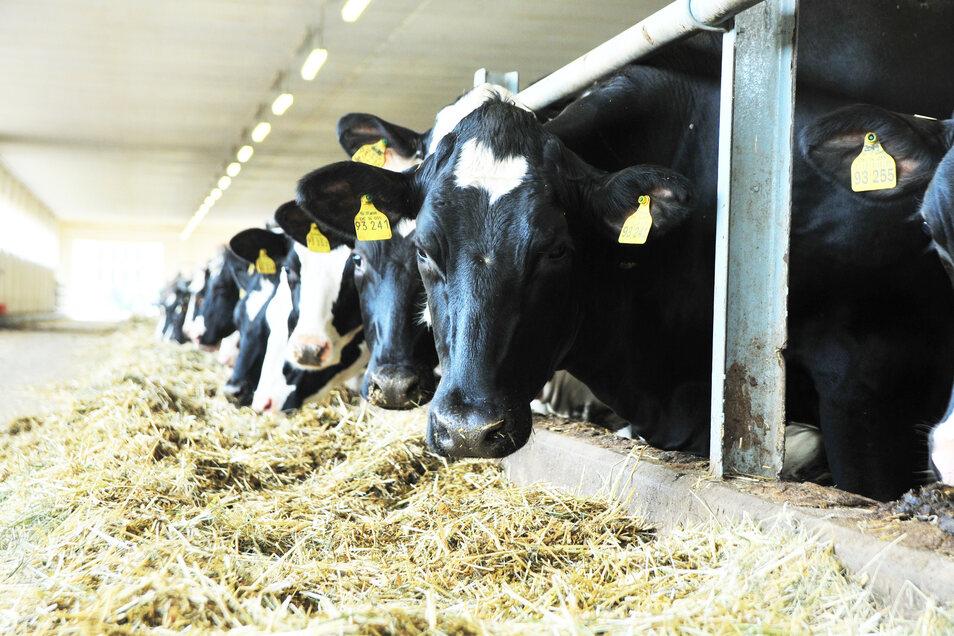 Nach dem Großfeuer in der Agrargenossenschaft Skäßchen gibt es eine tolle Nachricht: Alle Tiere sind wohlauf.