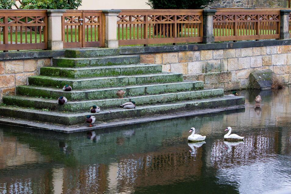 Auf dem Schlossteich des Jagdschloss Graupa bei Pirna sollen statt der Plastik-Schwäne bald wieder echte Schwäne schwimmen.