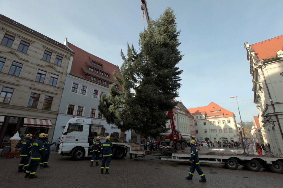 Am Kran schwebt der Baum in Pirna vom Tieflader an seinen Platz vor dem Rathaus.