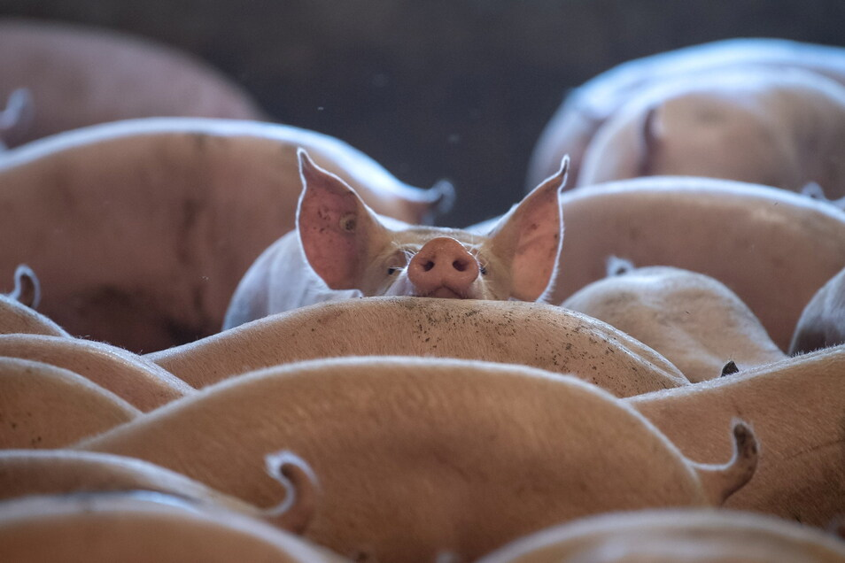 Nach dem Fund von noch lebenden TIeren in einem Abfallbehälter prüfen die Behörden nun Verstöße  gegen Haltungs- und Tierkörperbeseitigungsvorschriften.