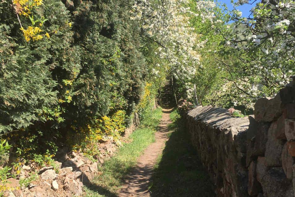 Der Aufgang zur Wettinhöhe führt vorbei an alten Mauern und Weinreben.