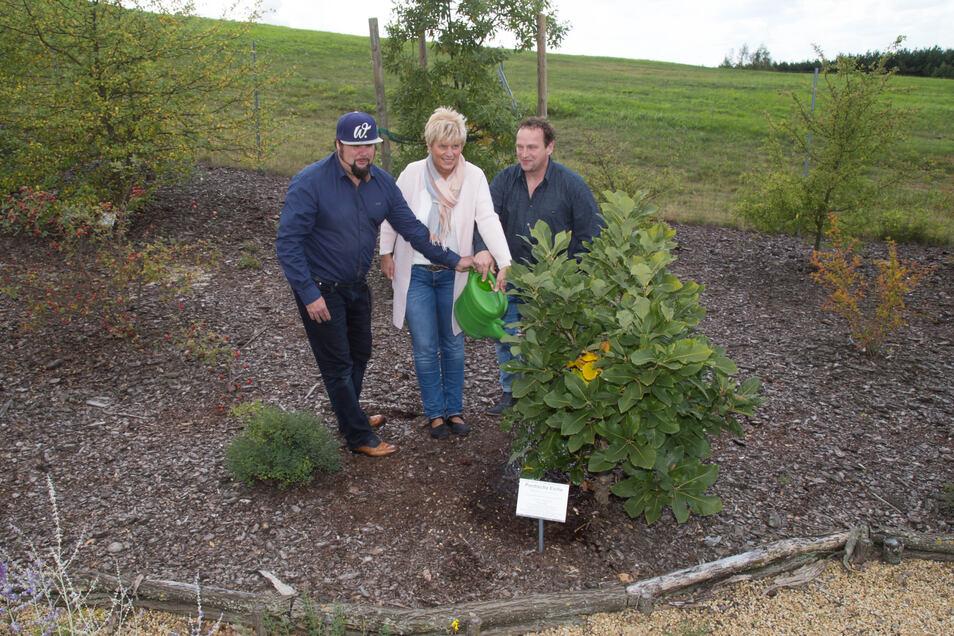 Im Findlingspark Nochten haben viele Bäume Paten. Im Jahr 2017 übernahmen die Preisträger des Tourismuspreises, André Böhme, Martina Taubmann und Tino Kittner, die Patenschaft über eine Pontische Eiche.