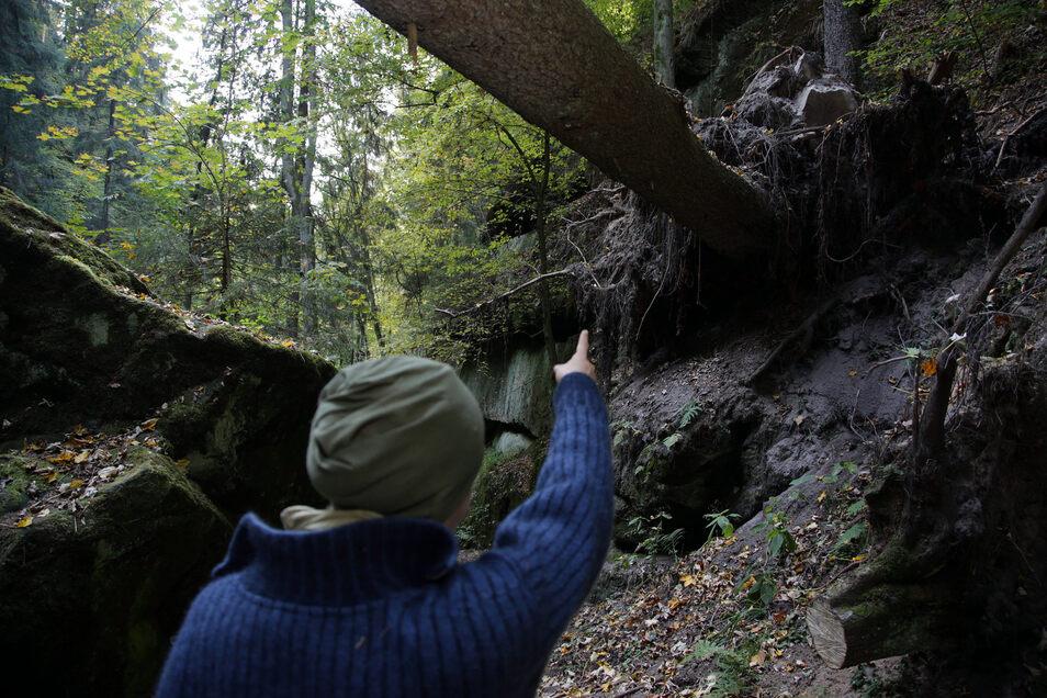 Der Schindergraben. Marode Brücken, umgestürzte Bäume und gefährliche Wurzeln lassen den Wanderer verzweifeln.