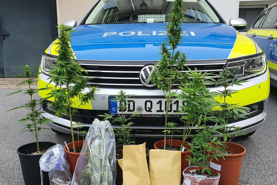Die Pflanzen fanden Polizisten auf einem Balkon eines Hauses am Nordostring in Bautzen.