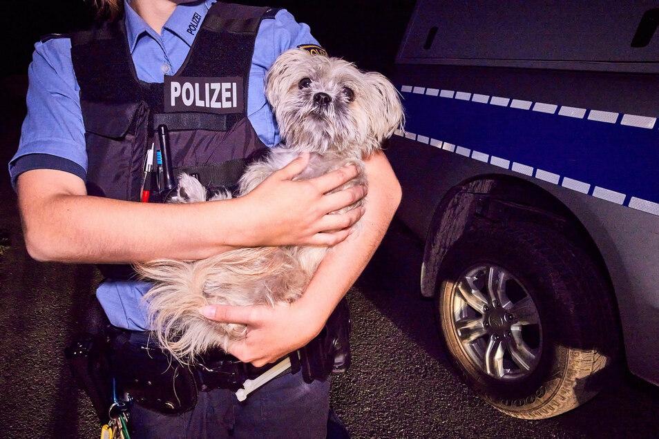 Der Hund aus dem Fluchtfahrzeug kam ins Tierheim.