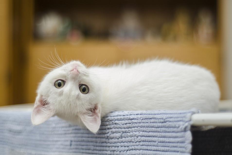 Gesunde Katzen brauchen den richtigen Nährstoffmix beim Futter.