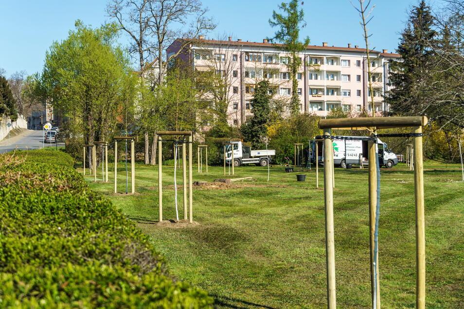 Das Poppitzer Dreieck an der Poppitzer Landstraße ist jetzt baumreicher als zuvor: Die Stadt hat 22 Bäume von einer Baumschule pflanzen lassen.